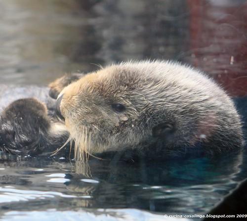 Otter klein copyr