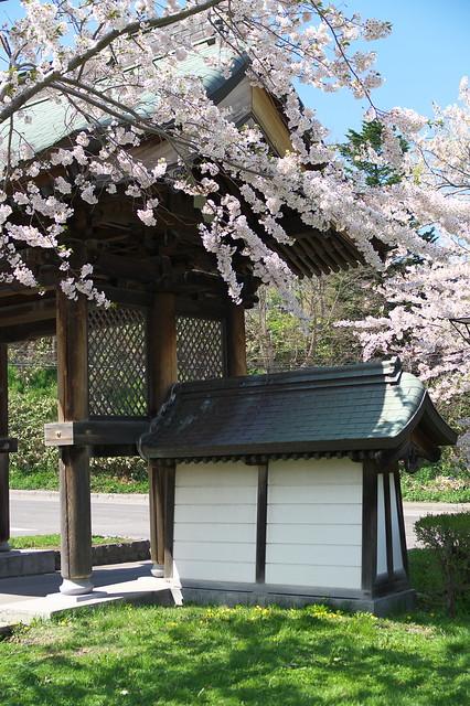 20160508天上寺の桜_05