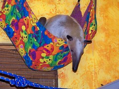 Pua in the baby hammock