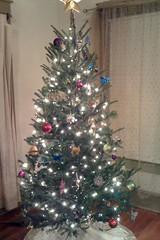 Tree 2011 Phase 3