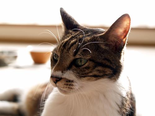 Nya - mischievous cat