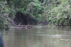 Guyana-9832