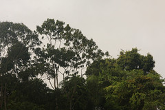 Guyana-9841