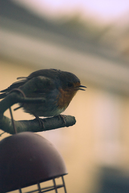261111_ hello mr robin #5