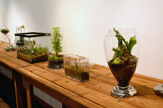 Terrarium landscapes designed by Jennifer Williams, on display in BBG's Steinhardt conservatory. Photo by Elizabeth Peters.