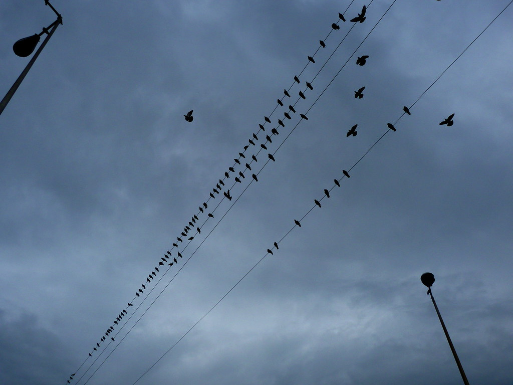 18-11-2011-hitchcocks-birds-in-ramat-gan