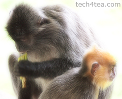 Mother and child silver leafed monkey. Taken with Olympus PEN E-P3 with Soft Focus effect.