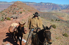 canyon(0.0), mule(1.0), trail riding(1.0), pack animal(1.0), landscape(1.0),