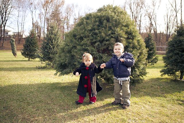 Christmas tree 2011-1