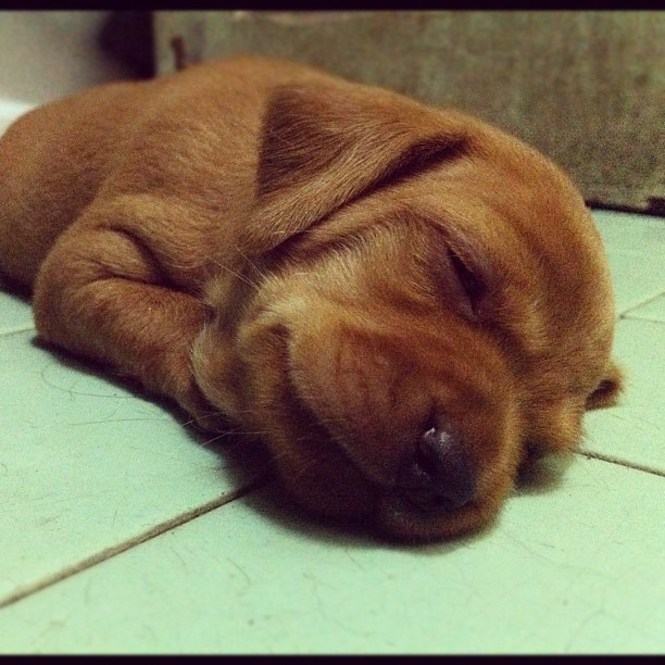 Goodnight, world! #dog #puppy | Explore leepradhantesch's ...