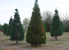 Christmas tree farms ready for holiday season in spite of drought