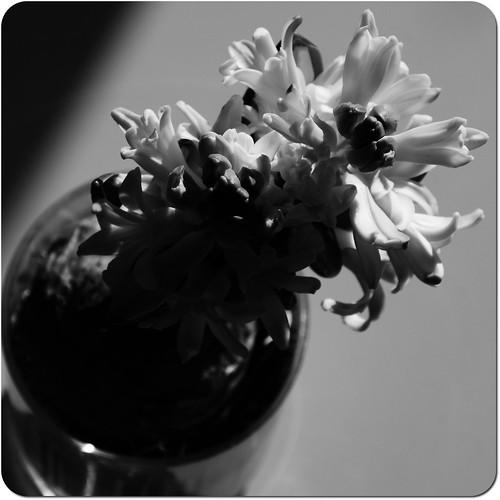 Le pouvoir des fleurs II... by skoub