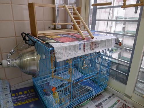 清理後的鳥陽台