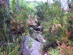 Canyon du Niffru : arrivée au ruisseau et à la sente de chasseurs vers la montée