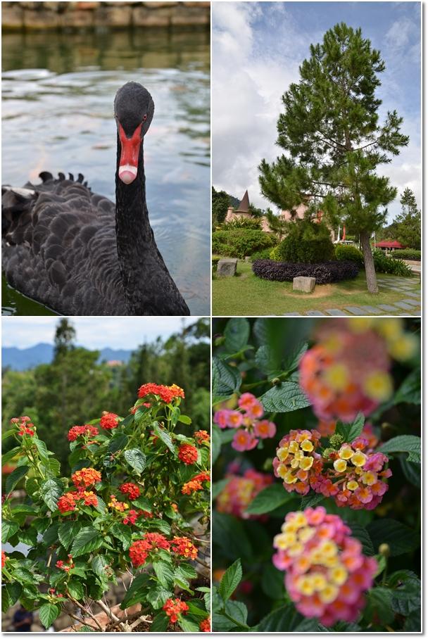 Black Swan & Flora