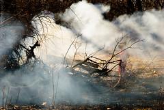wildfire(0.0), cloud(0.0), winter(0.0), frost(0.0), reflection(0.0), fire(0.0), mist(0.0), tree(1.0), sunlight(1.0), smoke(1.0), nature(1.0), autumn(1.0),