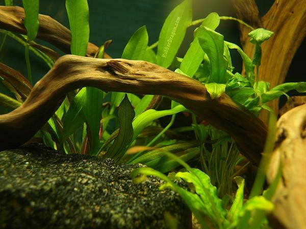 Fish Tank Scene Flickr - Photo Sharing!
