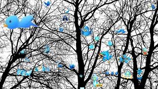 Twitter tree of Life