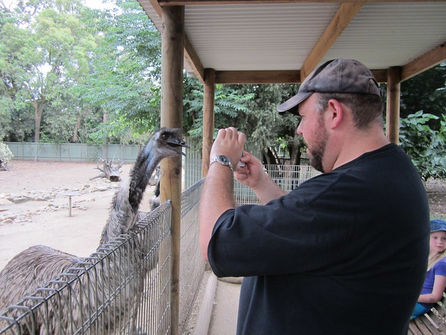 Featherdale - Emu fascinated with Iphone