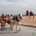 Horse and Carriage Ride at Great Pyramids of Giza - Egypt