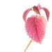 flowering by RuiCN