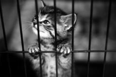 [フリー画像素材] 動物 1, 猫・ネコ, 子猫・小猫, モノクロ ID:201201120400