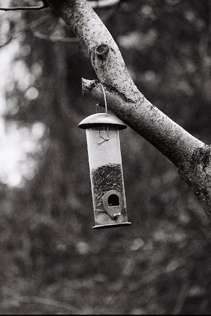 Birdfeeder, SOOC
