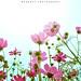 DSC_0056 by WANGHUY