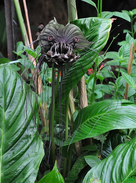 15 растений из ваших ночных кошмаров, которые существуют на самом деле