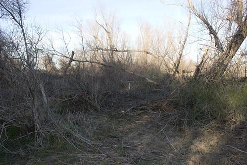 Wood Wreckage