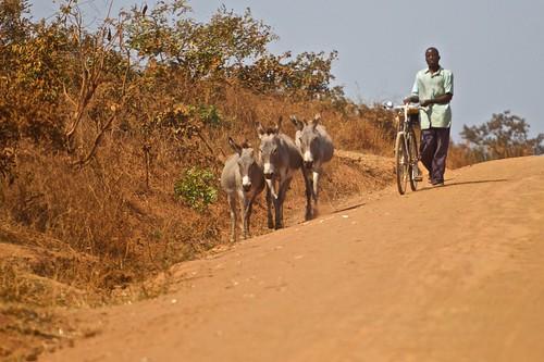 tanzania onroad