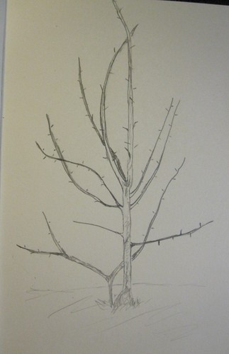 wk 3 - tree
