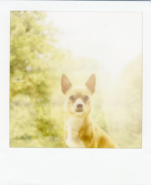 Polaroid 600 film from 2007