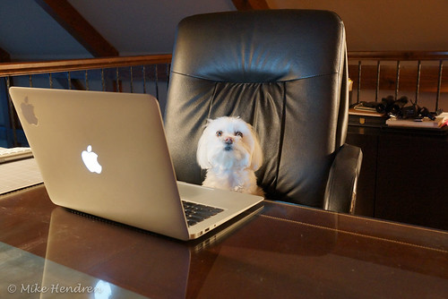 Photo of a cute little dog sitting in front of a computer