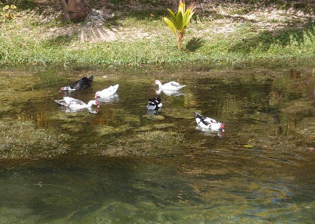Los Patos, DR