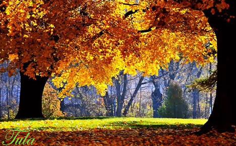 AMIZADE 252012 Flickr Photo Sharing