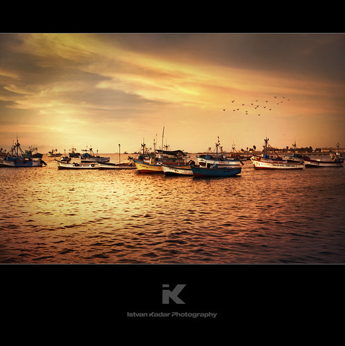 ocean sunset seascape bird beach peru landscape boat dock sundown harbour scenic ica paracas provinceofpisco