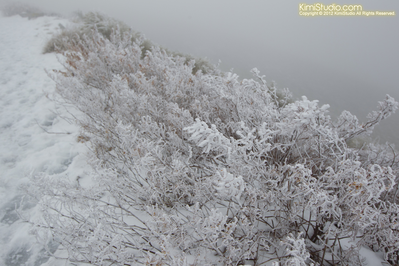 2012.01.31 Hohuan Mountain-019
