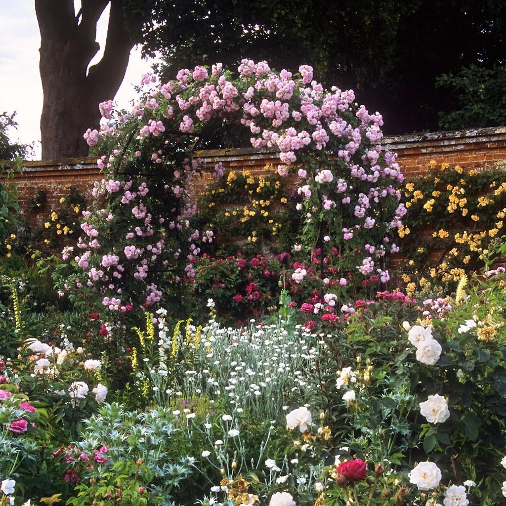 Mottisfont Abbey Rose Gardens Hampshire Uk The Best