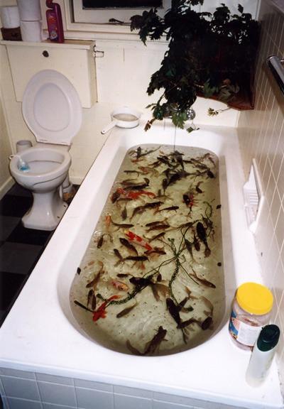 45_tvar_16_jo_russ_fish_in_bath