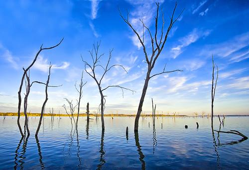 無料写真素材, 自然風景, 河川・湖, 樹木, 青色・ブルー