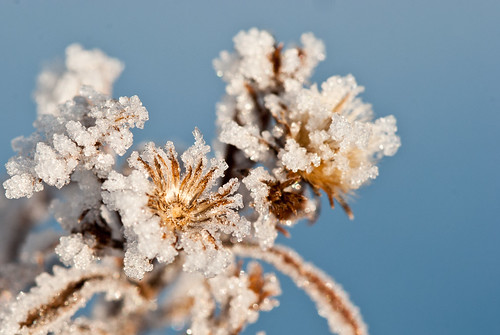 2012 02 05 Morning Frost 033
