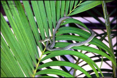 sam-snake001