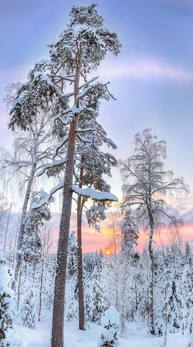 trees winter sunset sky panorama snow cold tree nature forest finland landscape geotagged woods frost lumi talvi puu hdr maisema luontokuva metsä taiga luonto naturephotography auringonlasku puita maisemakuva saari mäntsälä puut taivas panoraama kylmä tonemapped tonemap pakkanen 3exp hunttijärvi luonnonvalokuvaus terrilänpolku