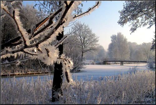 Winter Wonderland by Marilyn's foto's