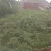Before - overgrown brambles!