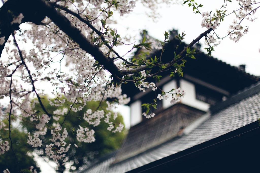 sakura_6857