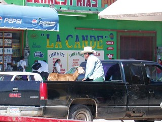 Mexico - :(( ¿Goat's last ride? :((