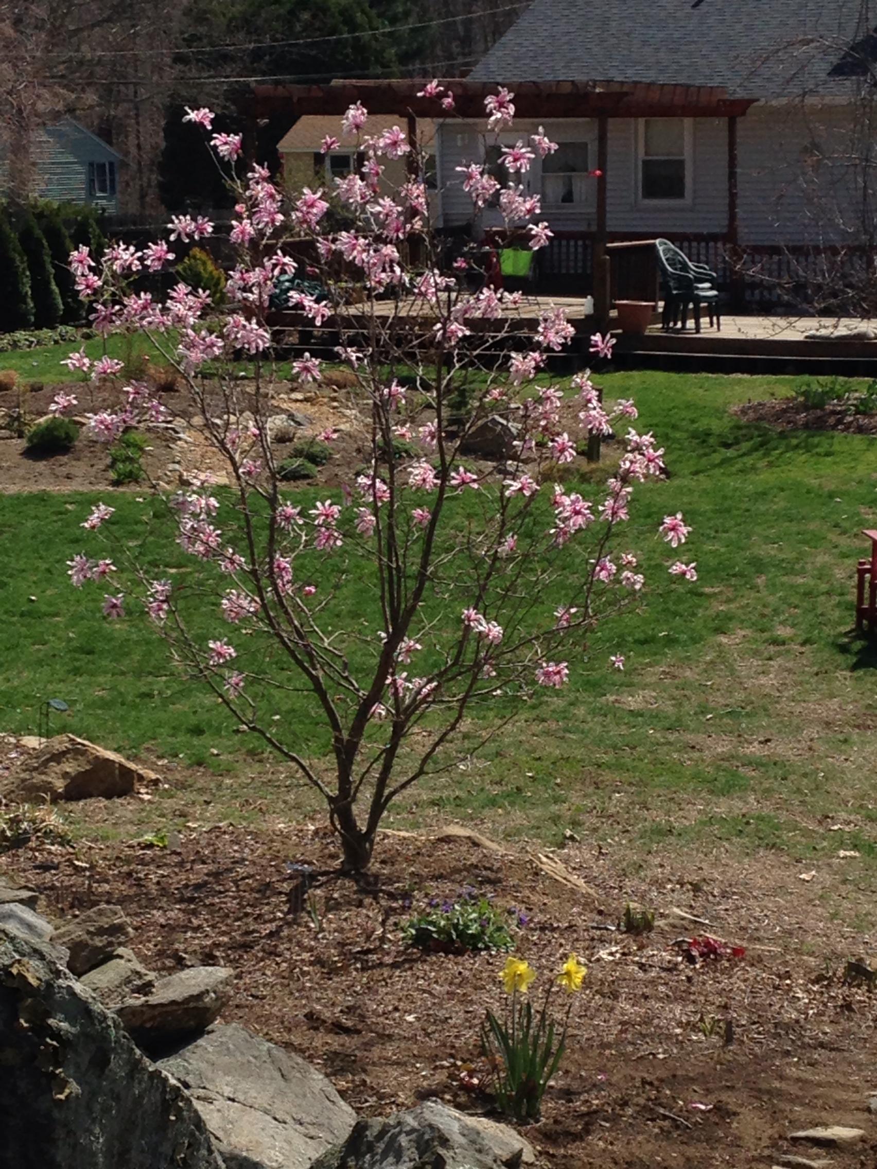 Garden on April 25