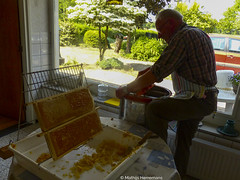 De eerste honing van het jaar, blauwe bessen honing